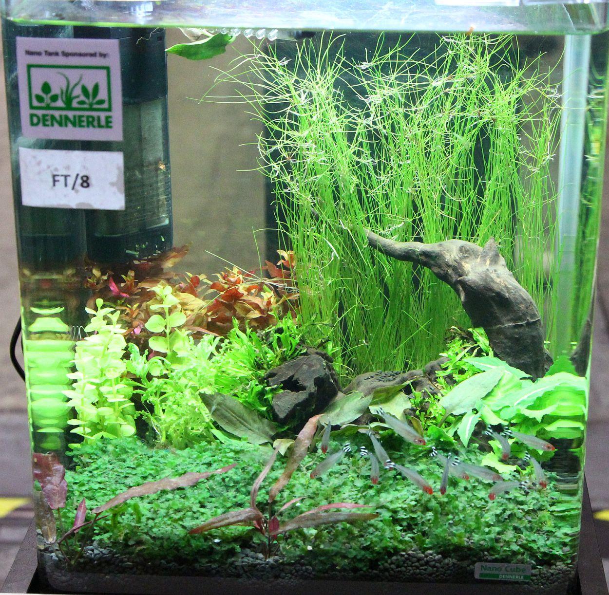 aquarama 2011 asia s largest ornamental and aquatic fish show
