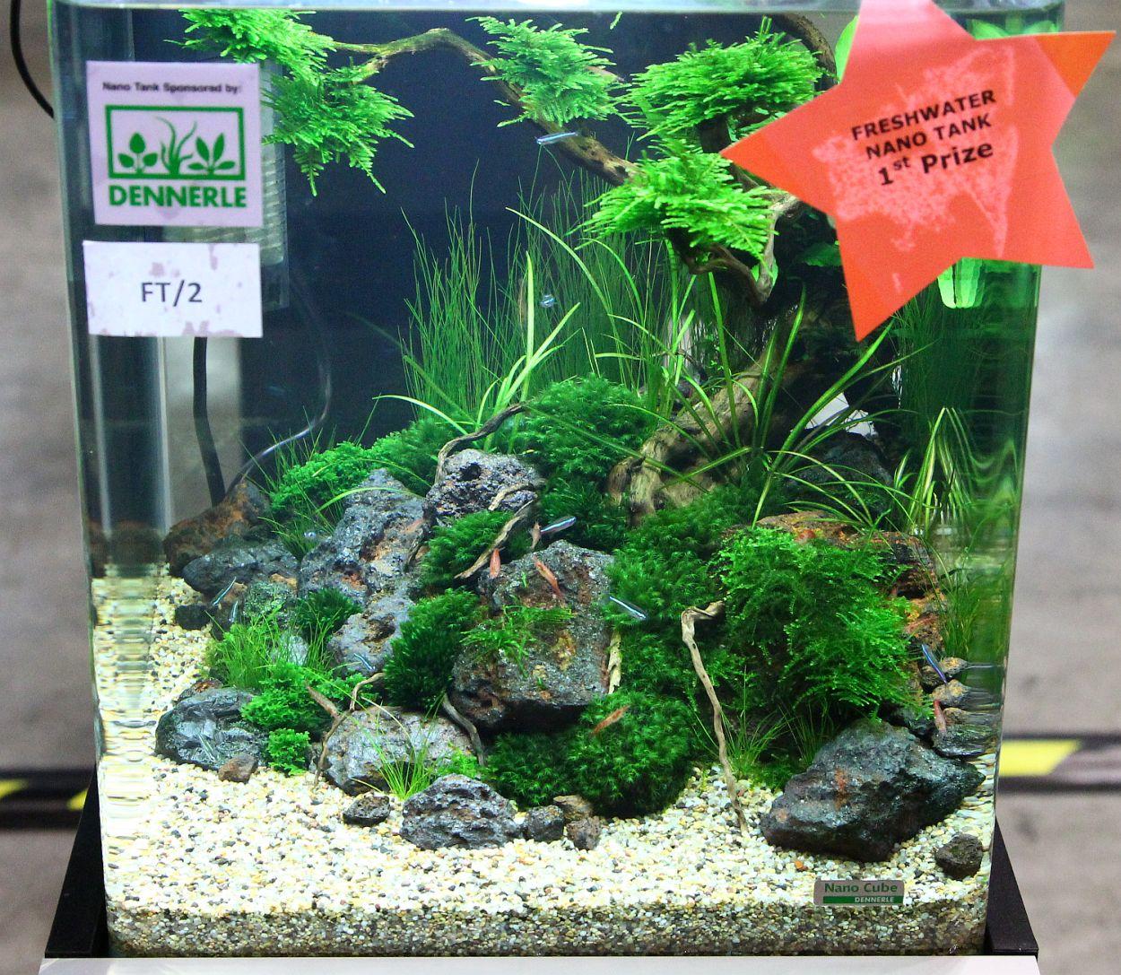 Freshwater aquarium fish from asia - Freshwater Aquarium Fish From Asia
