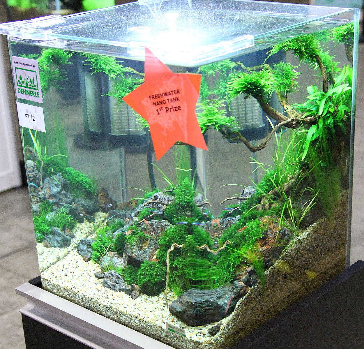 Aquarium nano fish tank - Freshwater Nano Tank 1st Prize