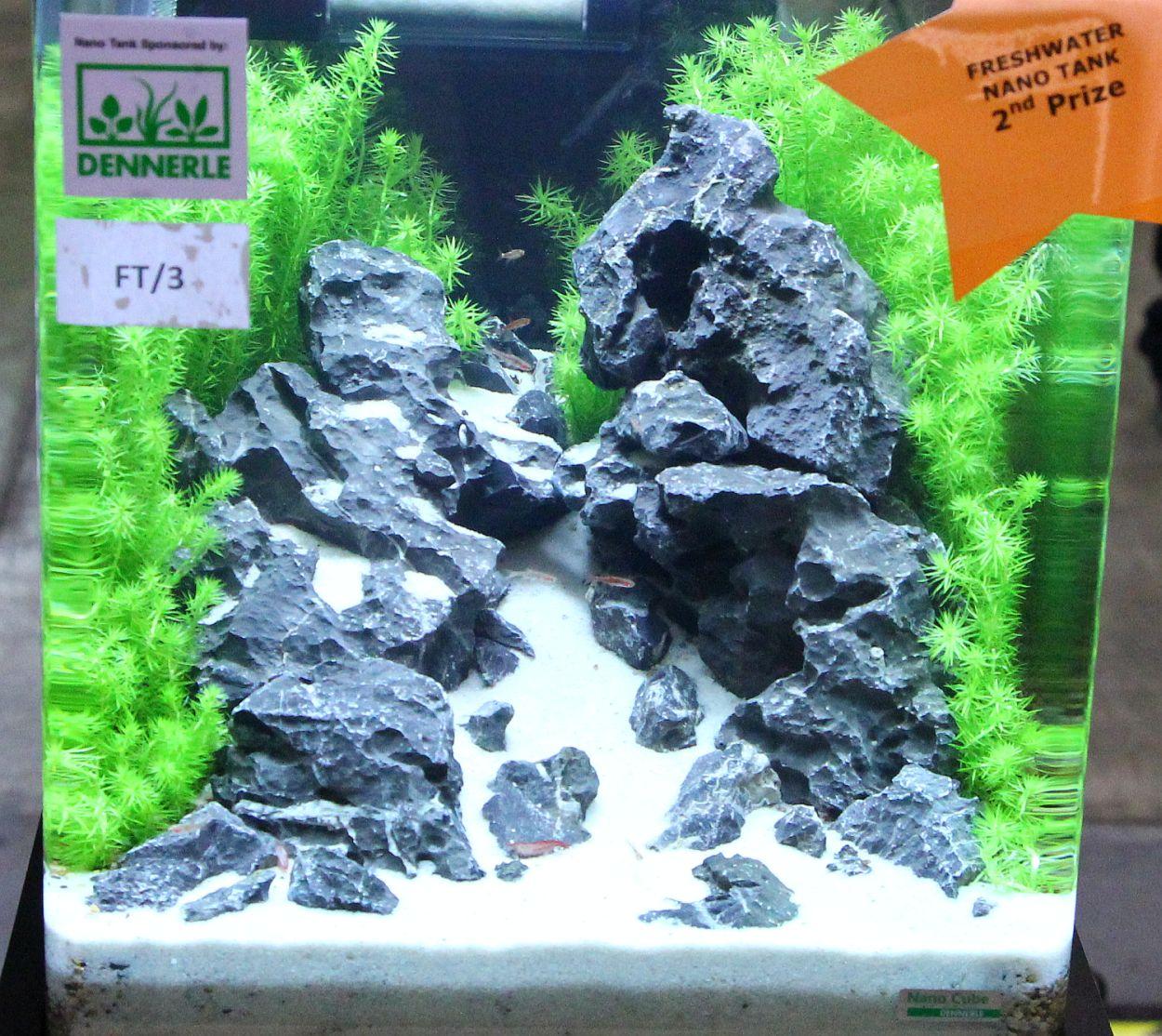 Fish for nano aquarium freshwater - Freshwater Nano Tank 1st Prize