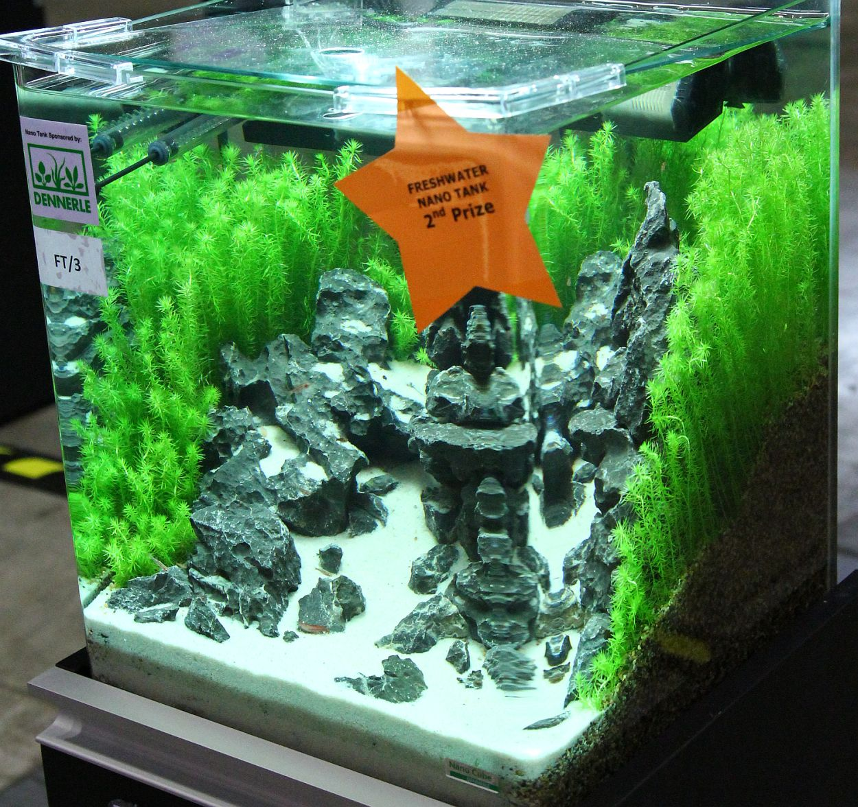 Freshwater aquarium fish nano - Freshwater Nano Tank 2nd Prize