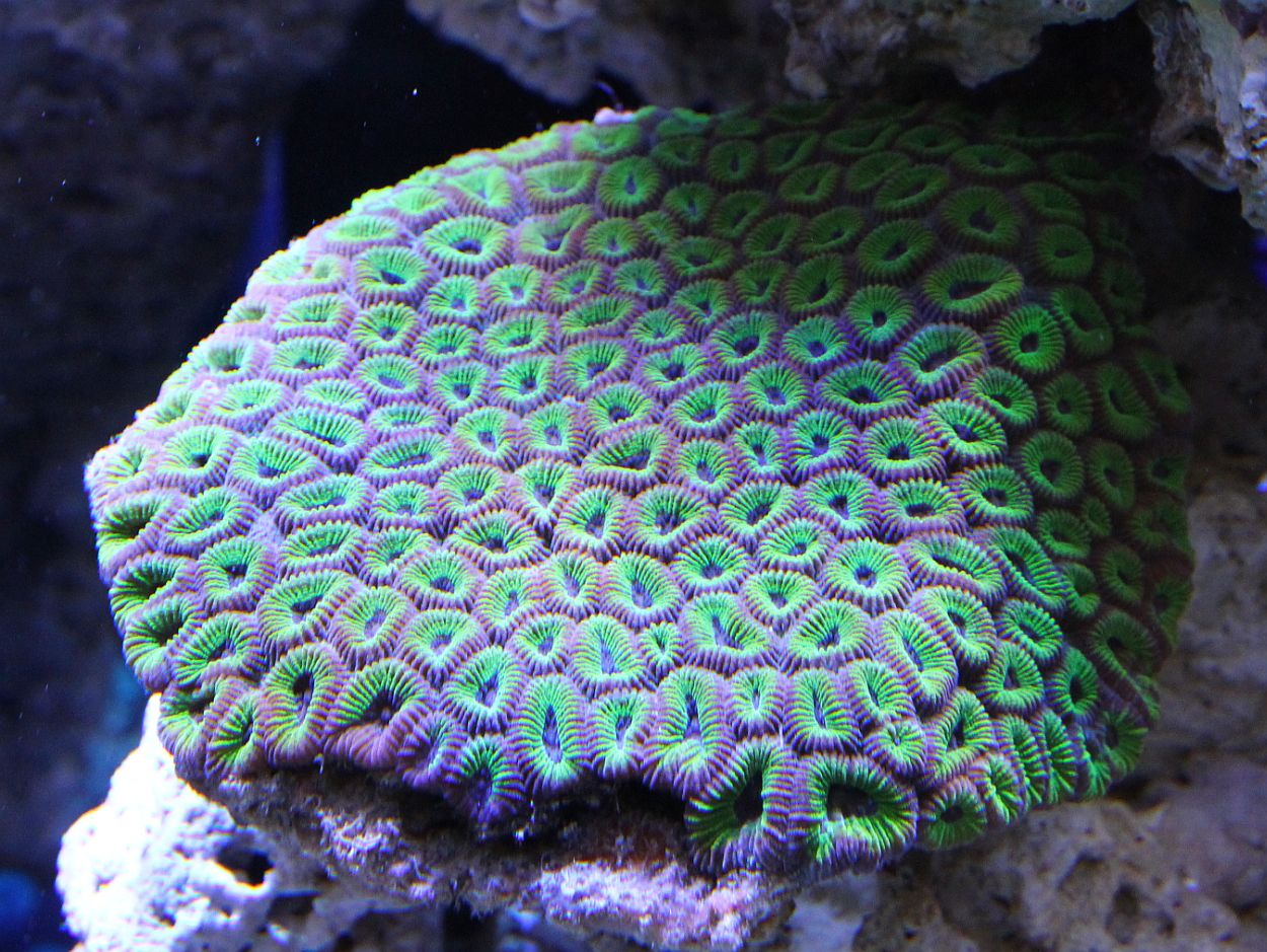 Aquarama 2011 - Asias largest ornamental and aquatic fish show