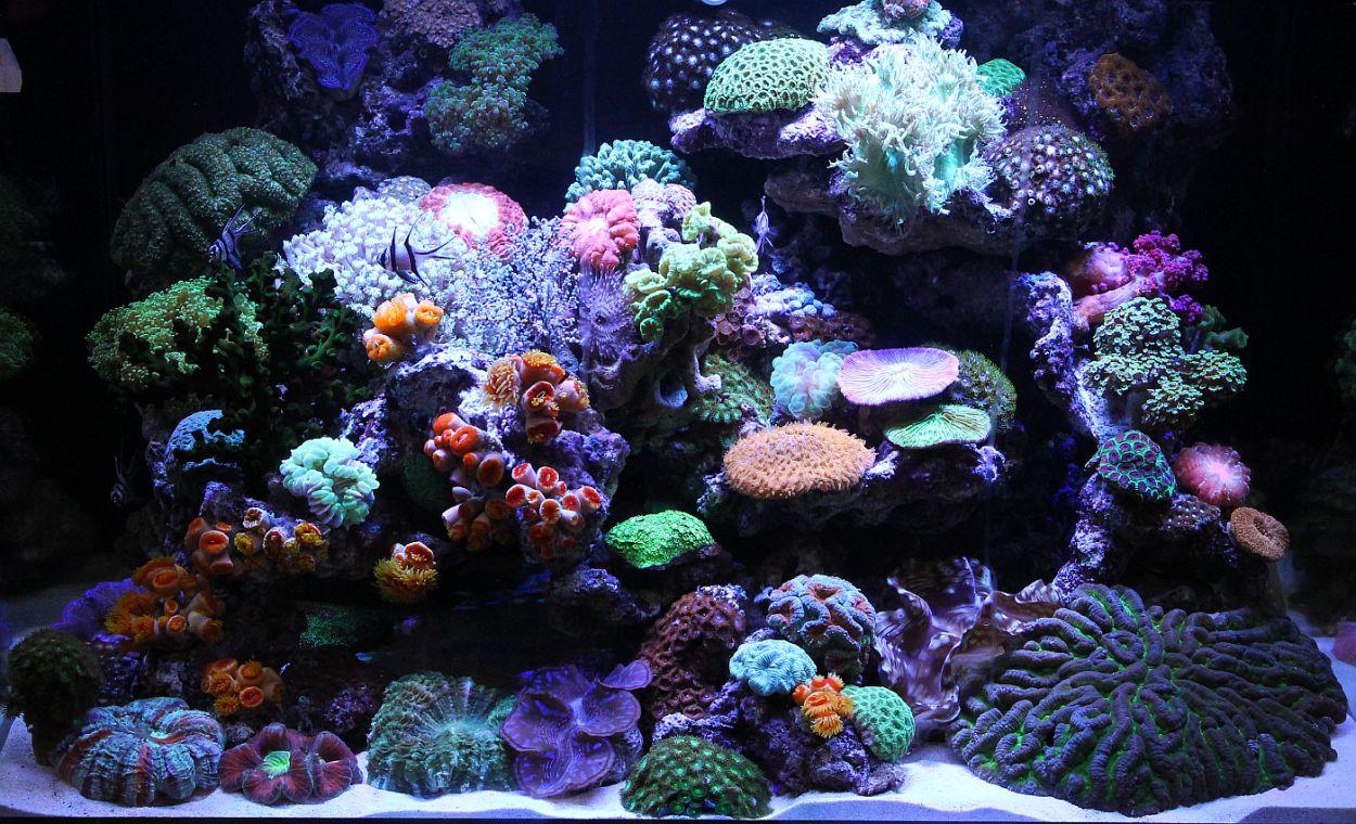 Aquarama 2011 asia 39 s largest ornamental and aquatic fish for Marina fish tank