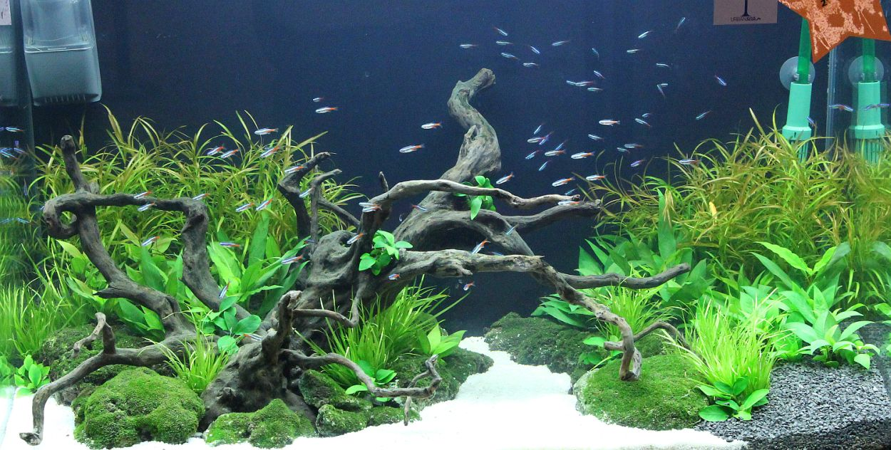 Aquarama 2011 asia 39 s largest ornamental and aquatic fish for Planted tank fish