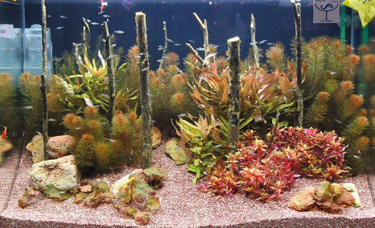 Planted Tank Competition : Aquarama 2011 - Planted Tank Competition
