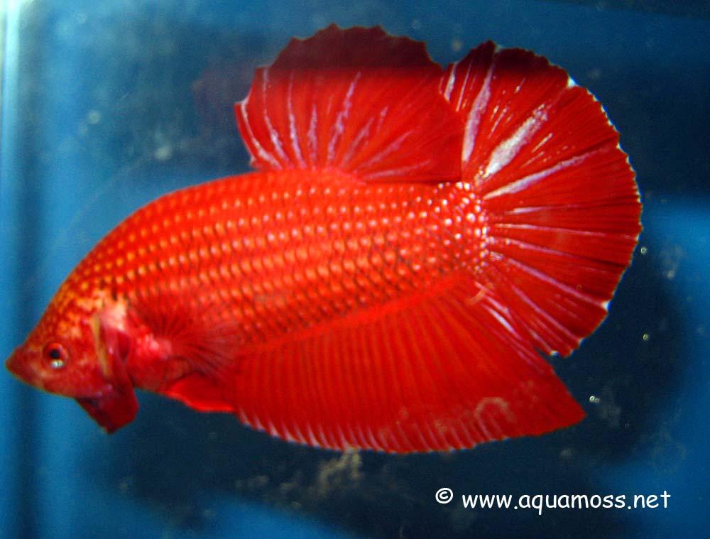 Aquarama 07 - Asia's largest ornamental and aquatic fish show