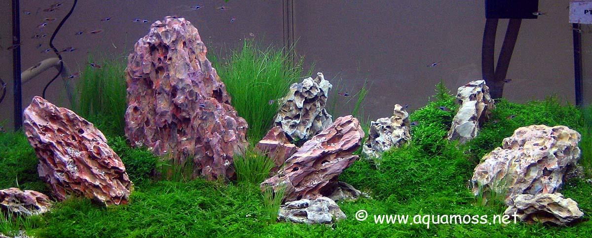 goldfish tank size. goldfish tank ideas. a