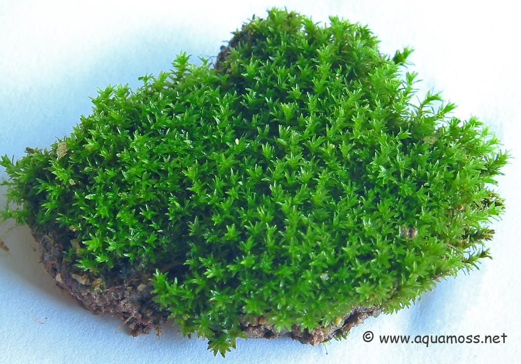 Organic Peat Moss Is Unsustainable And Harmful  Biochar